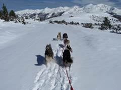 Snowshoeing and dogsled rides in Pyrénées