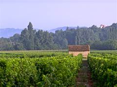 Vineyards and Heritage Tour Cahors AOP